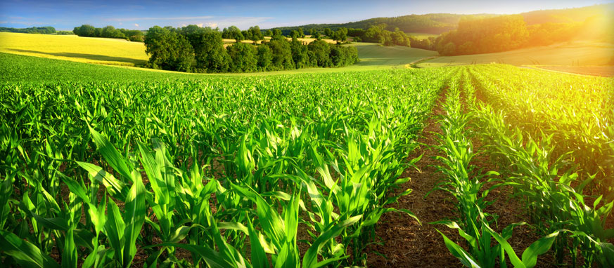 Beneficii fiscale pentru agricultori in 2017